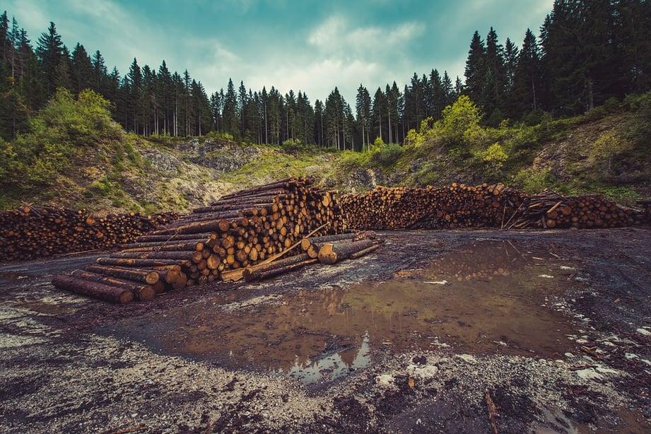 forestry-wood.jpg